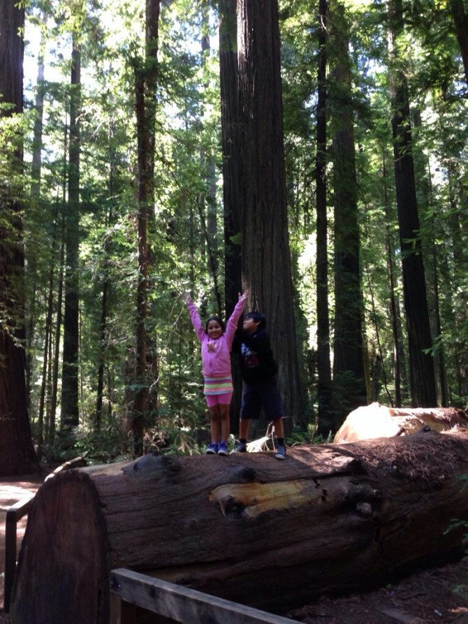 Exploring Avenue of the Giants
